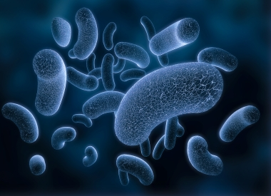 germes bacteries